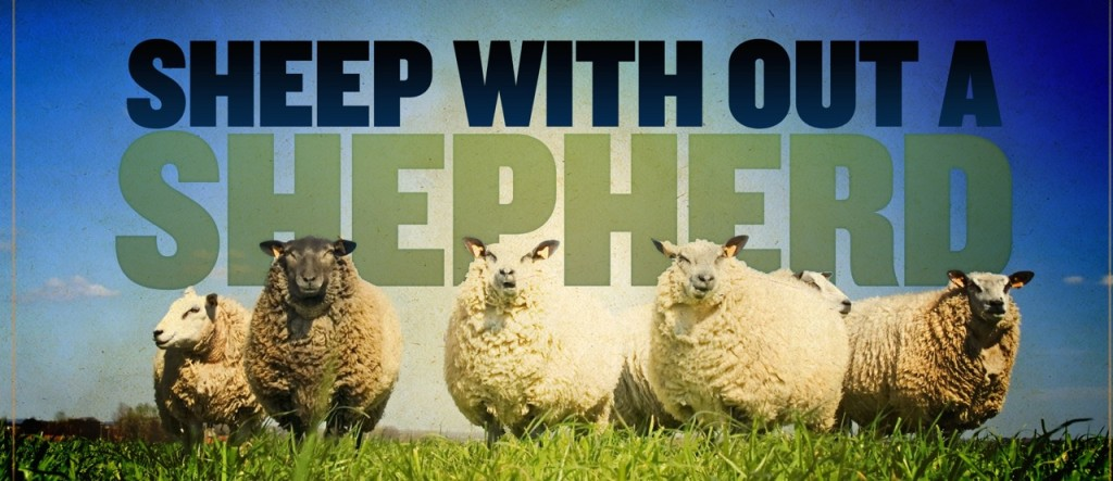 sheep wihout a shepherd_wide_t_nv